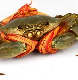 三门青蟹的特点